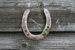 Fers à cheval avec l'oxalide petite oseille photo stock