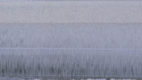 Fertigung des Mehls und der Getreide Weizenmahlen Produktion des Weizenmehls Weizenmehlprägeausrüstung in der Anlage stock footage