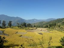 Fertile agricultural field in the hills of Nepal. This is the photograph of a fertile field in one of the western hills of Nepal,in which paddy field is shown royalty free stock photos