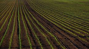 Fertile field, crops, arable land. And cultivation Royalty Free Stock Photos