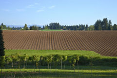Fertile field rural Oregon. Stock Image