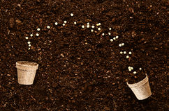 Fertile garden soil texture background top view. Fertile soil texture background seen from above, top view. Gardening or planting concept stock photo