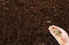 Fertile garden soil texture background top view. Fertile soil texture background seen from above, top view. Gardening or planting concept. Man`s hand planting or royalty free stock photography