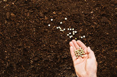 Fertile garden soil texture background top view. Fertile soil texture background seen from above, top view. Gardening or planting concept. Man`s hand planting or royalty free stock images