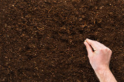 Fertile garden soil texture background top view. Fertile soil texture background seen from above, top view. Gardening or planting concept. Man`s hand planting or stock images
