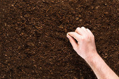 Fertile garden soil texture background top view. Fertile soil texture background seen from above, top view. Gardening or planting concept. Man`s hand planting or royalty free stock photos