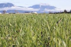 Fertile Grassland Royalty Free Stock Photos