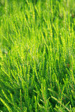 Fertile green vegetation. Summer breeze of green vegetation in the summer garden and meadows stock images