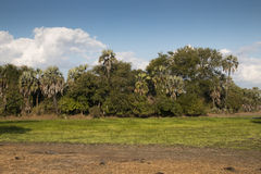 Fertile lake in Gorongosa National Park Royalty Free Stock Photography