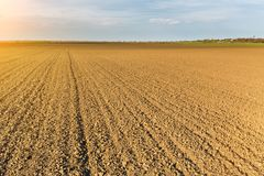 Fertile land, arable crop field. Agricultural landscape.  Stock Image