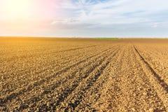 Fertile land, arable crop field. Agricultural landscape.  Stock Images