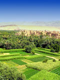 Fertile oasis in desert. Aerial view of fertile oasis in Moroccan desert, buildings in background Stock Images