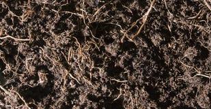 Fertile soil with backs Royalty Free Stock Image