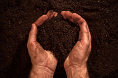 Fertile soil in dirty male hands. Man holding arable cultivated humus dirt Royalty Free Stock Photography
