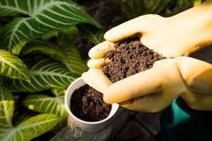 Fertile soil Royalty Free Stock Photo