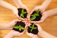Fertile soil. Hands of people holding fertile soil with sprouts Stock Photography