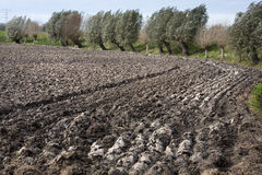 Fertile soil. Plowed field and willows in the wind royalty free stock photography