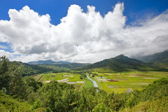 Fertile Valley. Wide angle view of Hanalei Valley in Kauai, Hawaii stock photography
