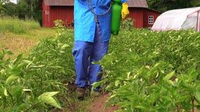 Fertilizante líquido del espray del granjero en la patata para un mejor crecimiento almacen de metraje de vídeo