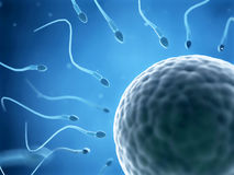 The fertilization. 3d rendered illustration of the fertilization Stock Photo