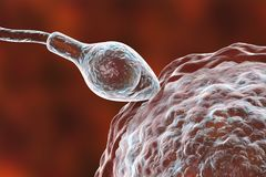 Fertilization of human egg cell by spermatozoan. 3D illustration Stock Photos