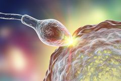 Fertilization of human egg cell by spermatozoan. 3D illustration Stock Photo