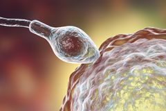 Fertilization of human egg cell by spermatozoan. 3D illustration Royalty Free Stock Photography