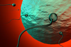 Fertilization of Sperm and Egg, 3D Rendering Stock Photography