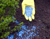 Fertilize Stock Image
