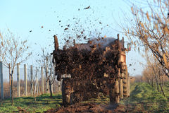 Agriculture. Fertilize of cow dung from tractor trail in hazelnut orchard Royalty Free Stock Image