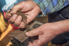Fertilize soil with hands. Farmer fertilizing soil with two hands Stock Images