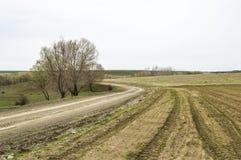 Fertilized ha coltivato il campo, il giacimento verde fertilizzato della lenticchia, il fertilizzante e l'agricoltura Immagine Stock