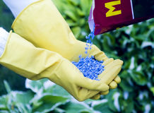 Fertilizer. To pour in hands Royalty Free Stock Photo