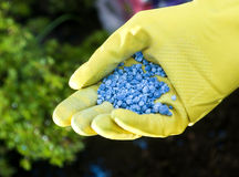 Fertilizer. To pour in hands Stock Photos