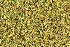 Fertilizer Background. Small particle slow release lawn fertilizer closeup Royalty Free Stock Image