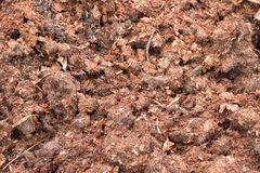 Fertilizer from cow dung Royalty Free Stock Images