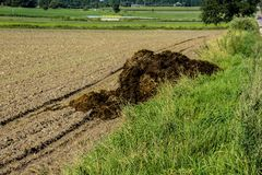 Fertilizer from cow manure and straw. In the beginning of autumn a lot of manure was exported on the field to fertilize the fields. Podlasie, Poland royalty free stock photography