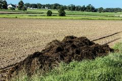Fertilizer from cow manure and straw. In the beginning of autumn a lot of manure was exported on the field to fertilize the fields. Podlasie, Poland royalty free stock photo