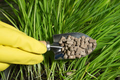 Fertilizer in hand Royalty Free Stock Images