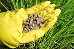 Fertilizer in hand Stock Photo