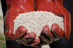 Fertilizer. Hands protected by gloves catching fertilizer Stock Photos