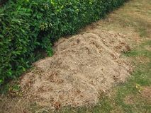 Fertilizer hay. To make good agriculture stock photo