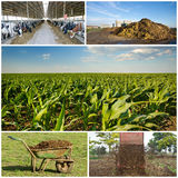 Fertilizing field Stock Images
