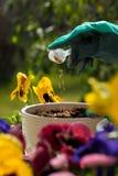 Fertilizing flowers royalty free stock photo