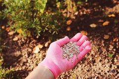 Fertilizing garden plants in summer. Gardener hand in glove Stock Photography