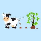 Fertilizing the land. Dutch dairy cow pooping and fertilizing the land. Tree rising over compost. . Blue background Stock Photography
