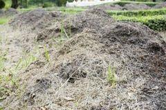 Fertilizzante del concime del maiale Fotografia Stock Libera da Diritti