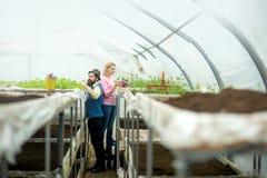 fertilizzante del suolo produzione del fertilizzante del suolo fertilizzante naturale del suolo in serra fertilizzante del suolo  immagine stock libera da diritti
