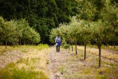 Fertilizzante di diffusione dell'agricoltore anziano in frutteto Fotografie Stock Libere da Diritti