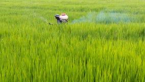 Fertilizzante di spruzzatura dell'agricoltore in risone Immagine Stock